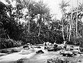 COLLECTIE TROPENMUSEUM Batak mannen in een rivier die langs de kampong Roemahkinangkong stroomt TMnr 60038098.jpg