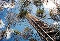 CSIRO ScienceImage 1730 Forestry science.jpg