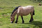 Cabalo no alto da Coma. Andorra 282.jpg
