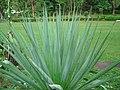 Cacti kodaikanal t.n - panoramio.jpg