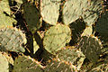 Cactus - Close Up (6989397337).jpg