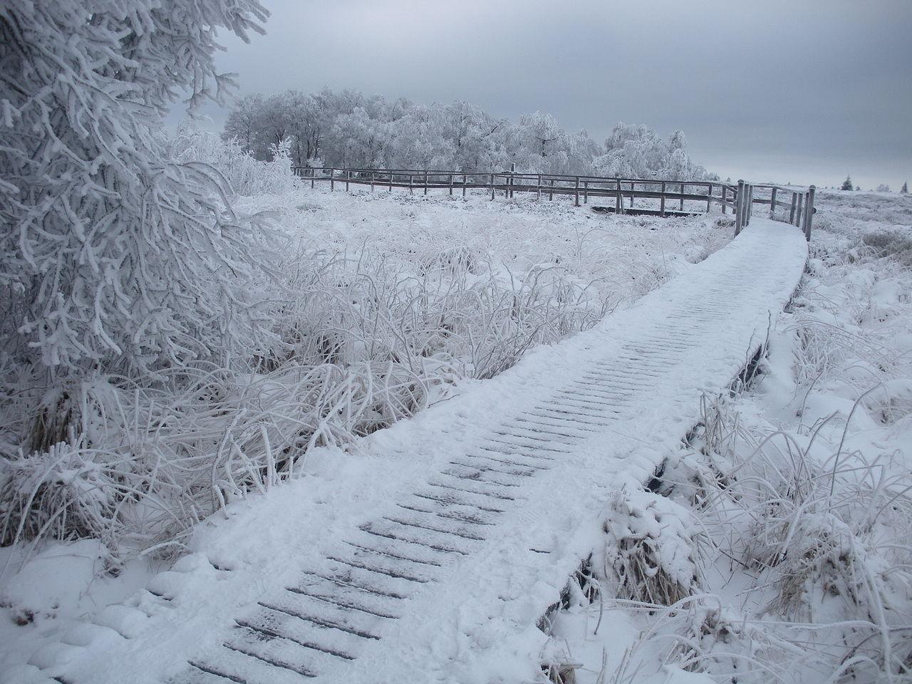 Fichier caillebotis de la fagne wallonne sous la neige r serve naturelle des hautes fagnes - La ren des neige ...