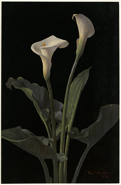 File:Calla Lilies by Boston Public Library.jpg