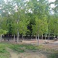 Campo de Petanca Hospital del Temple Casa Rural Boquiñeni (19).jpg
