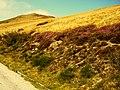 Capriasca, Switzerland - panoramio (2).jpg