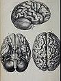 Caractères phrénologiques et physiognomoniques des contemporains les plus célèbres, selon les systèmes de Gall, Spurzheim, Lavater, etc. (1837) (14784420782).jpg