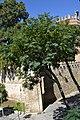 Castillo de San Marcos (36447430093).jpg