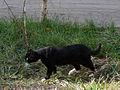 Cat E1.jpg