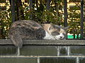 Cat Nora on Ome Railway Park 20071104.jpg