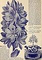 Catalogue of rare Florida flowers and fruits (1892) (19961189064).jpg