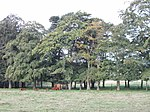 File:Cattle and trees by Knockiemill Cottages - geograph.org.uk - 555835.jpg
