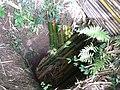 Cave entrance (88850034).jpg