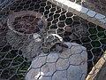 Center for turtle reproduction, Bulgaria 002.JPG