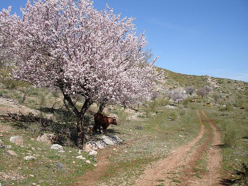 File:Cerca de los Llanos de Líbar - panoramio.jpg
