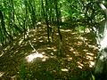 Cetatea dacică de la Tilişca. Val şi şanţ de pământ, terasă inferioară, Nord..jpg