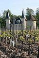 Château d'Agassac débourement des vignes.jpg