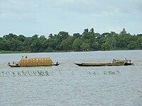 Chalan Beel Natore Bangladesh (7).JPG