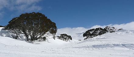 Looking through Charlotte Pass towards the main range in winter. Charlotte Pass, winter view.jpg