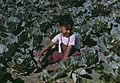 Child of a migratory farm laborer in the field during the harvest1a34265v.jpg