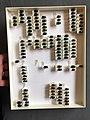Chrysomelidae collection, Natural History Museum, London 192.jpg
