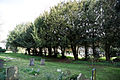 Church of St Mary and St Christopher, Panfield - churchyard yew trees.jpg