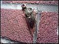 Cicada82307.jpeg
