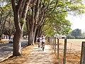 Ciclovia - 2011-10-01 - Isack - panoramio.jpg
