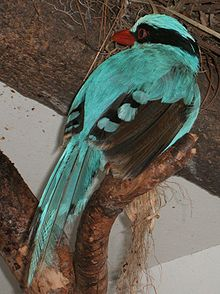 Cissa-chinensis-National-Zoo-2010.jpg