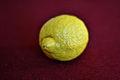 Citron (4479879430).jpg