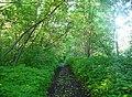 Clarke trail - panoramio.jpg