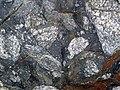 Clast-rich impact pseudotachylite (Sudbury Breccia, Paleoproterozoic, 1.85 Ga; Windy Lake Northwest roadcut, Sudbury Impact Structure, Ontario, Canada) 93 (46842354385).jpg