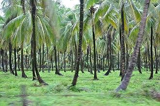 Essequibo Islands-West Demerara - Image: Coconut Grove in Wakenaam panoramio (2)