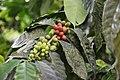 Coffee! (46157879242).jpg
