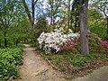 Coker Arboretum - March 2020.jpg