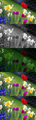 Colorful spring garden Bayer + RGB.png