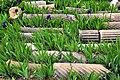 Columnas Timgad 2.jpg