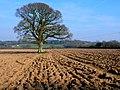 Countryside near Leigh - geograph.org.uk - 1216569.jpg