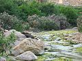 Cours d'eau a Menâa 5 (Wilaya de Batna).jpg