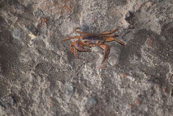 Crab snap - Anish Joshi -SGNP-Borivali.jpg