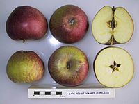 Cross section of Dark Red Staymared, National Fruit Collection (acc. 1950-141).jpg