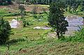 Cultures dans la Province du Centre - Sri Lanka.jpg