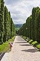Cypress alley. Kislovodsk. Кипарисовая аллея. Кисловодск.jpg
