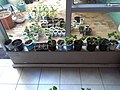 DIY planters.jpg