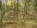 Daimonji mountain path - panoramio.jpg