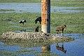 Daqing wetlands horse grazing.jpg