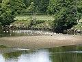 Dart river by Totnes 2.jpg