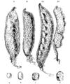Darwin Domestic 141.png