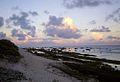 Dawn in ducie island.jpg