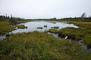 Flark - A water-filled flark in a bog in Fundy National Park, New Brunswick