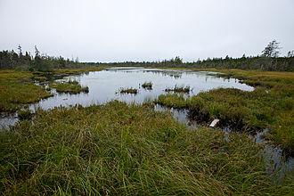 Flark - A water-filled flark in a bog in Fundy National Park, New Brunswick